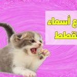 اسماء قطط عربية جديدة