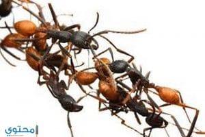 تفسير رؤيه النمل فى الحلم