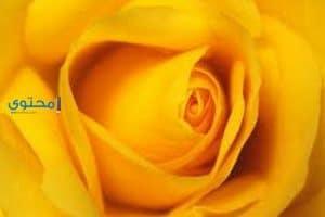 تفسير رؤية اللون الأصفر فى الحلم بالتفصيل