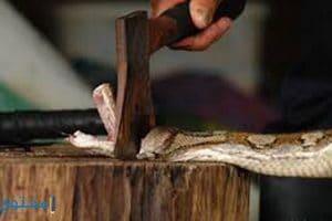 تفسير رؤيه قتل الثعبان أو الحيه فى المنام بالتفصيل
