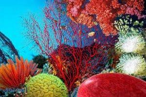 تفسير رؤيه المرجان فى الحلم بالتفصيل