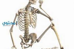 تفسير رؤية عظام الأنسان والحيوان فى المنام