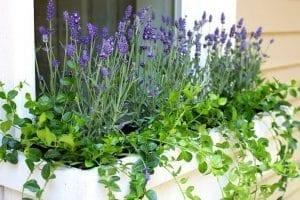 نباتات يمكن زراعتها ف المنزل