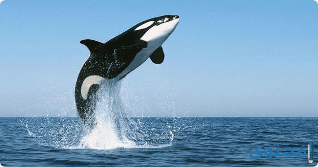 تفسير الاحلام والرؤي الحوت في المنام