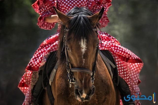 حقائق ومعلومات عن الخيول موقع محتوى