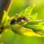 تفسير الاحلام والرؤي النمل في المنام