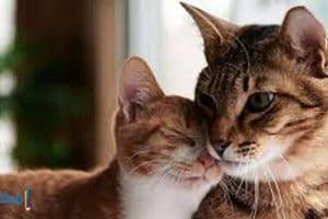 تفسير رؤيه القطط فى الحلم