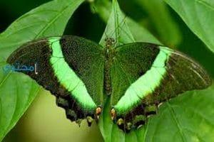 تفسير رؤية اللون الأخضر فى الحلم