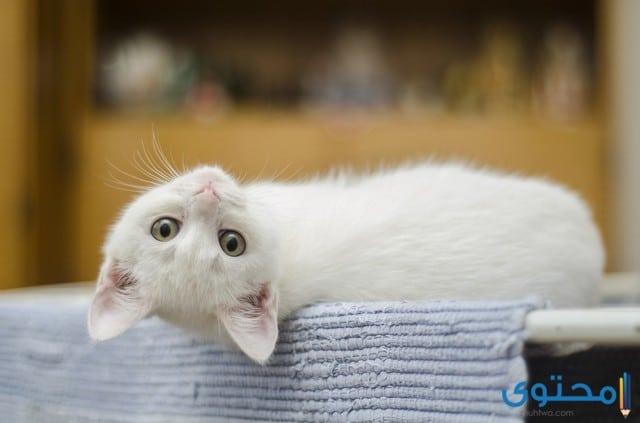 حركات وأصوات القطط
