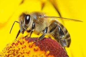 تفسير رؤية النحل فى المنام