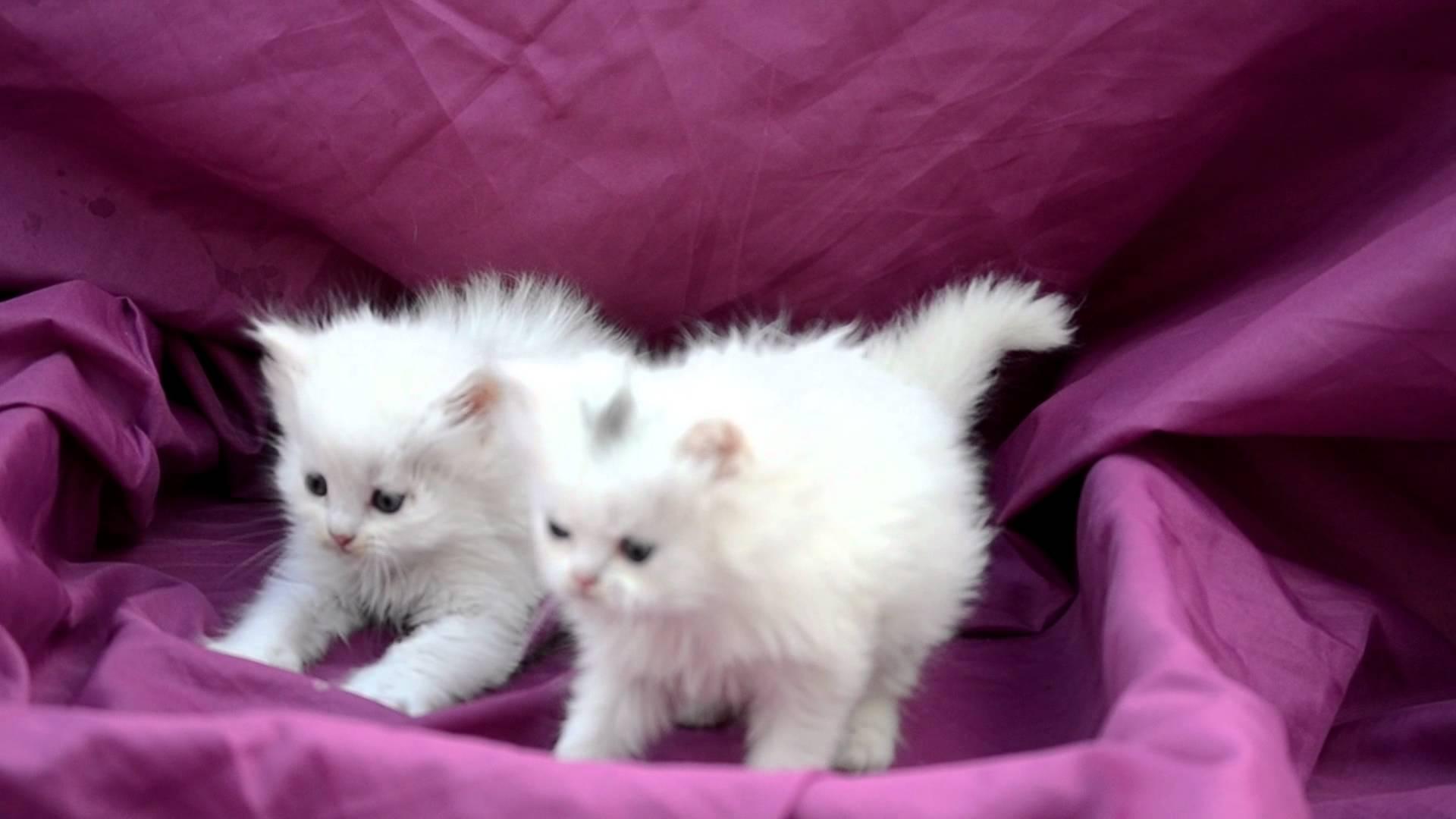أسماء قطط عربية جميله