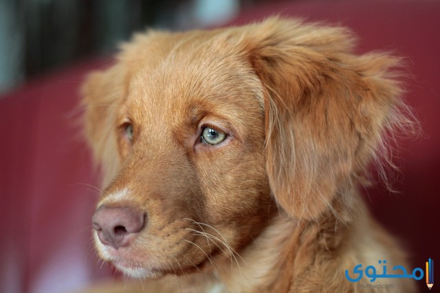 اسماء كلاب اناث بالعربي