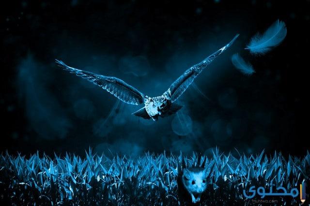 الحيوانات الليلية