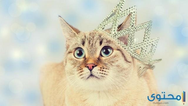 اسماء قطط اناث تركية