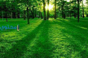 تفسير رؤية العشب الأخضر فى الحلم